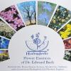 Bachova cvjetna terapija